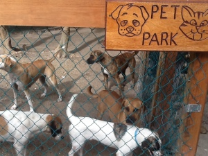 kennypetpark.315224307_large